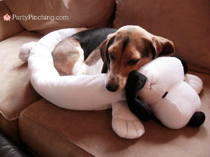 beagle, Snoopy, Snoopy bed