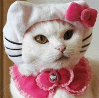 Hello Kitty costume for cats pet costume, pet costume, PartyPinching.com, Best Halloween costumes for kids, DIY kids costumes, easy kids costumes to make, adorable and cute Halloween costumes for toddlers and infants, Halloween party ideas