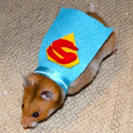 Super Hamster costume, pet costume, pet costume, PartyPinching.com, Best Halloween costumes for kids, DIY kids costumes, easy kids costumes to make, adorable and cute Halloween costumes for toddlers and infants, Halloween party ideas
