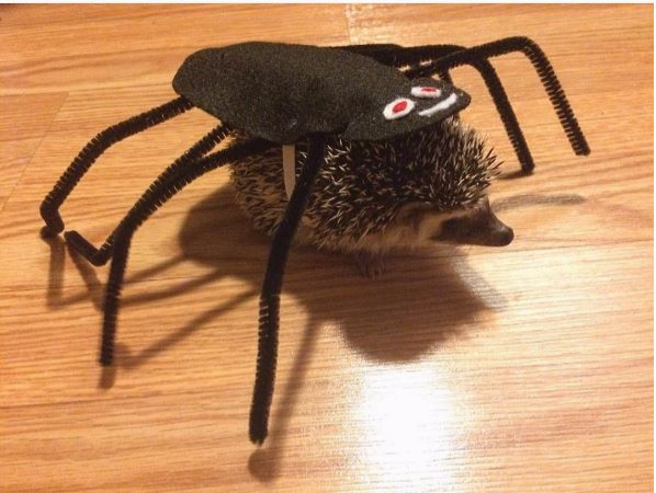 Hedgehog spider costume,