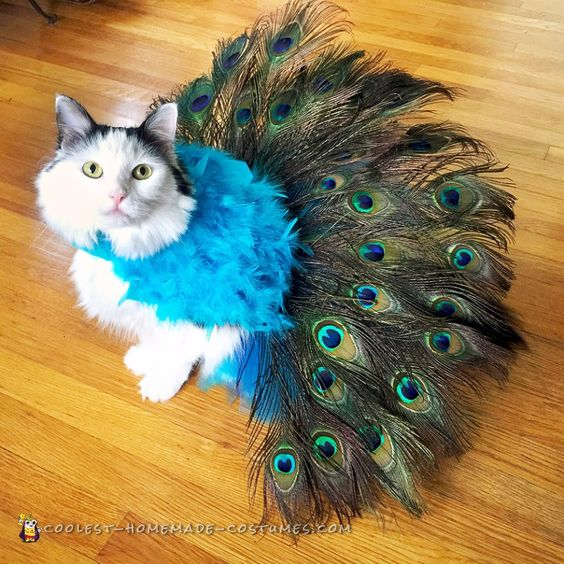 cat peacock costume, DIY Halloween pet costume, cute pet costumes