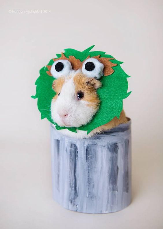 Guinea Pig Hamster costumes for Halloween, DIY pet costumes, cutest best easy pet costumes