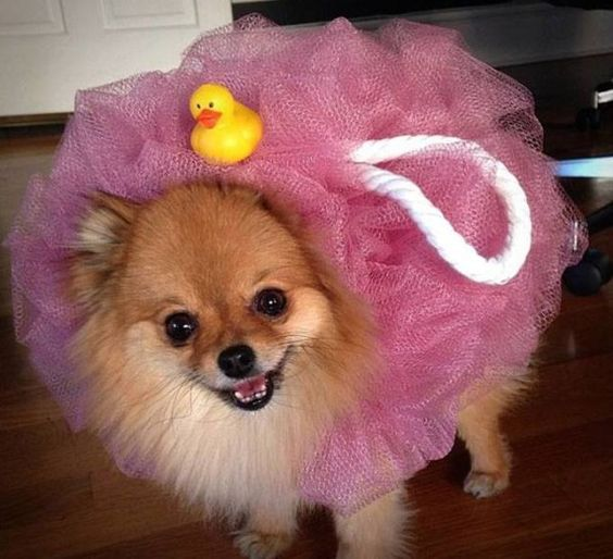 Loofah dog, cute pet costumes for Halloween, easy diy costumes for pets