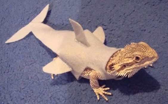 iguana shark, cute easy DIY Halloween costume for pets