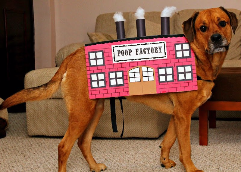 poop factory easy DIY Halloween pet costume for dogs