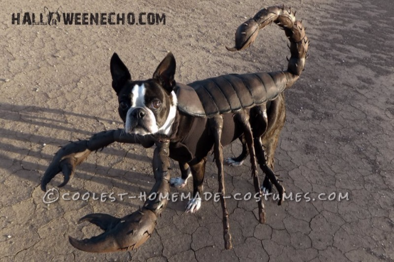 scorpion costume diy Halloween costumes for dogs and pets
