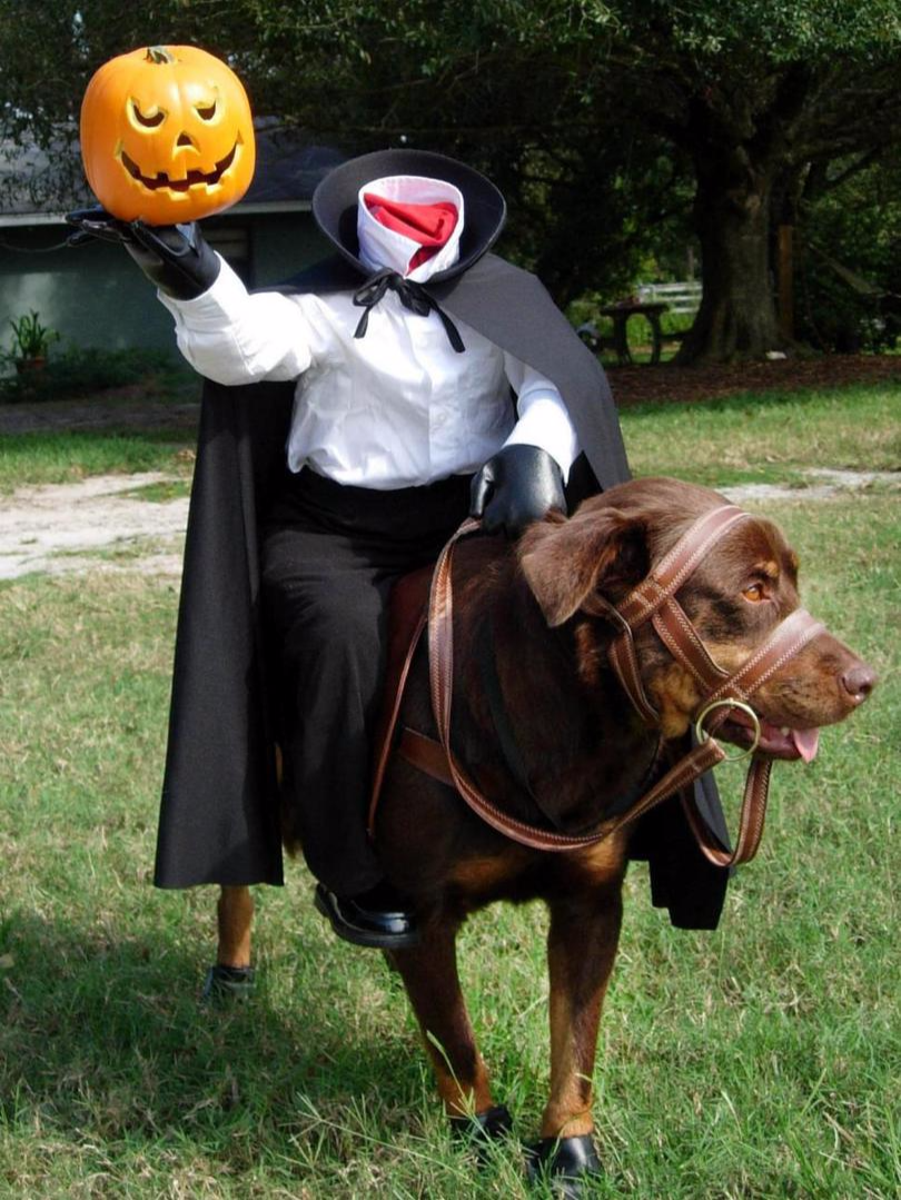 headless horseman halloween costume easy DIY costume for dogs and pets