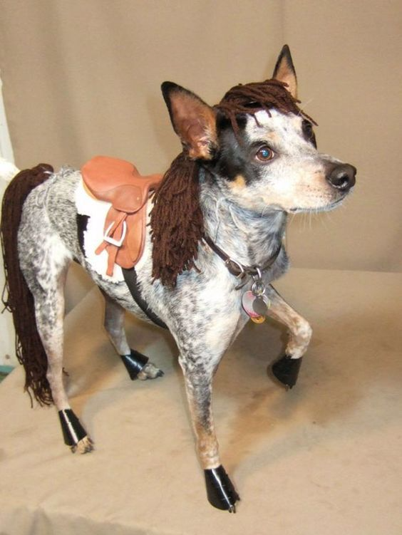 Easy DIY horse costume for dogs, pet costume for Halloween