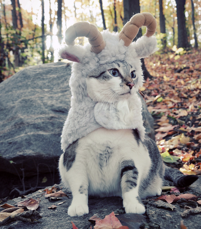 mountain goat cat costume for halloween, cute pet costume ideas