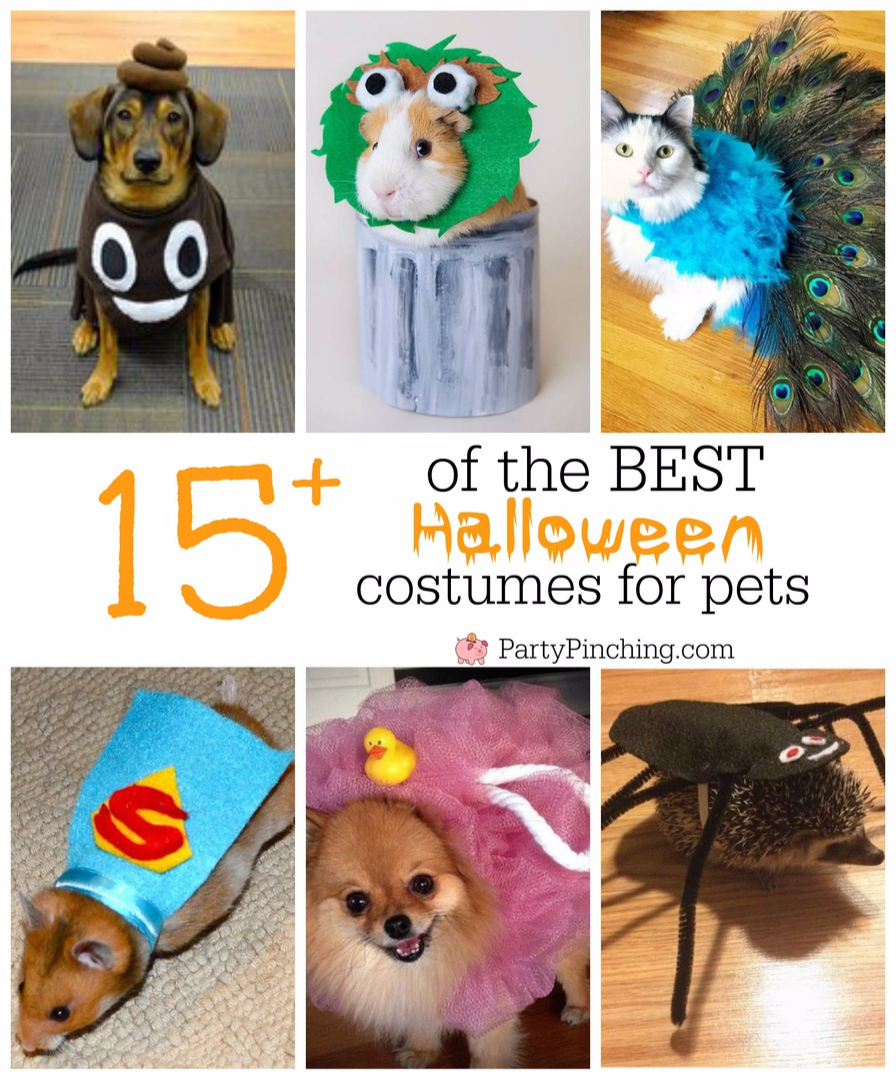 Party Pinching's best Halloween costumes for pets, cute dog, cat, hamster, guinea pig, iguana hedgehog costumes DIY halloween costume ideas